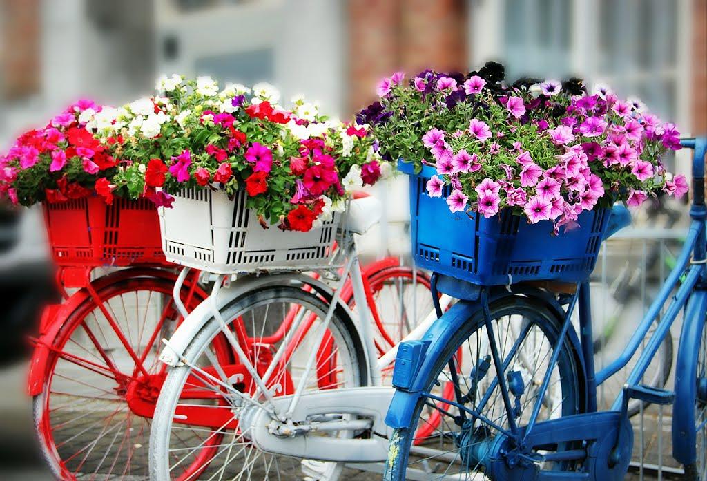 Consegne fiori a domicilio Nettuno Roma Anzio Latina