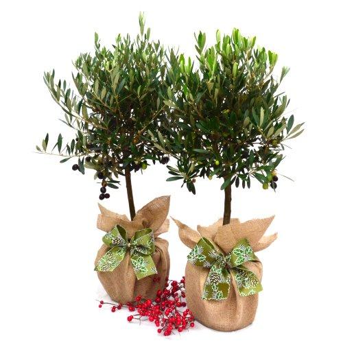 consegna piante a domicilio