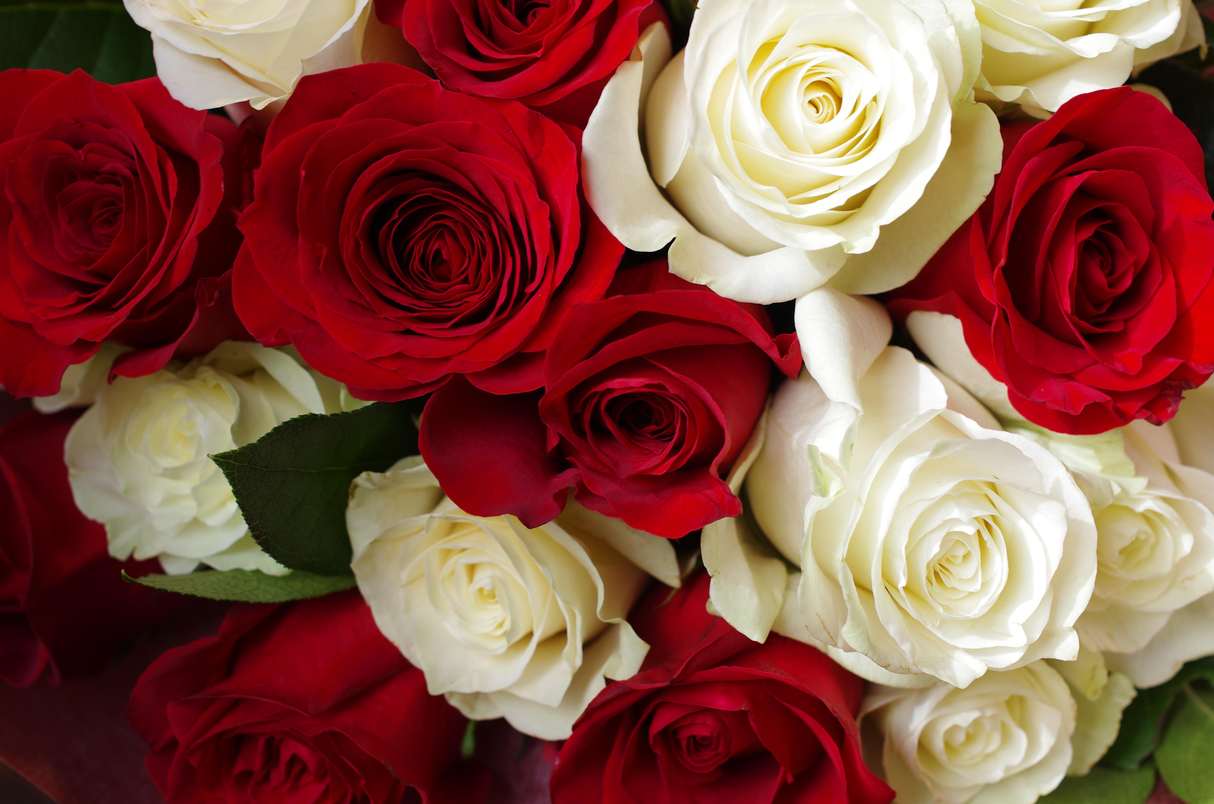 Fiori San Valentino Nettuno Roma Anzio