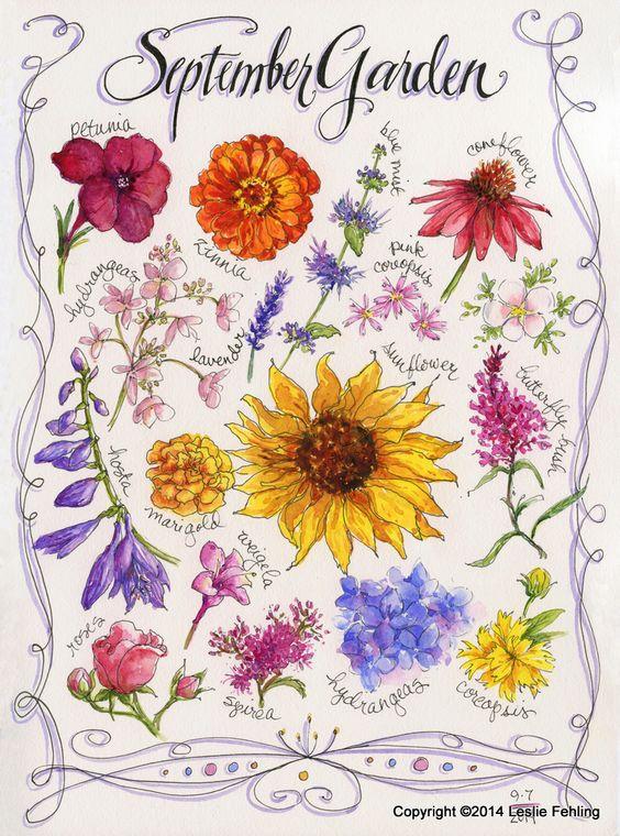Top I fiori di Settembre e Ottobre - Fioraio Nettuno (Roma): Imbiscuso PB19