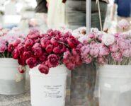 vendita fiori e piante Nettuno