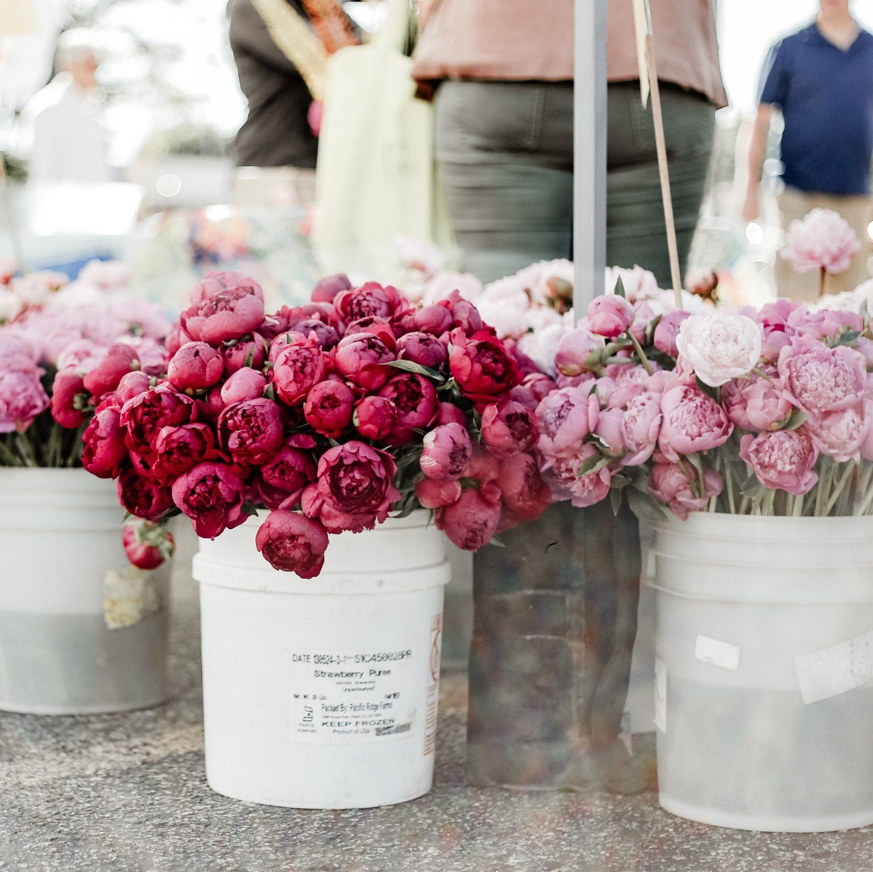 Vendita fiori e piante